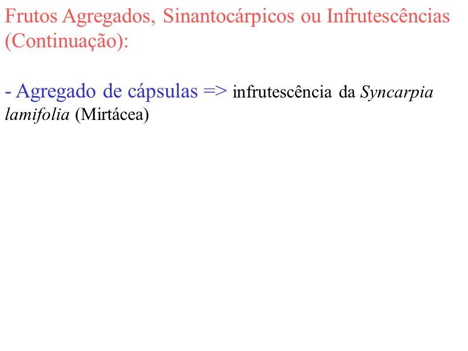 Frutos Agregados, Sinantocárpicos ou Infrutescências (Continuação):