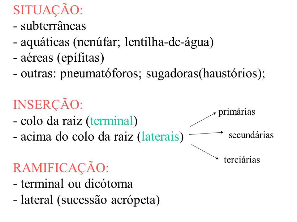 - aquáticas (nenúfar; lentilha-de-água) - aéreas (epífitas)