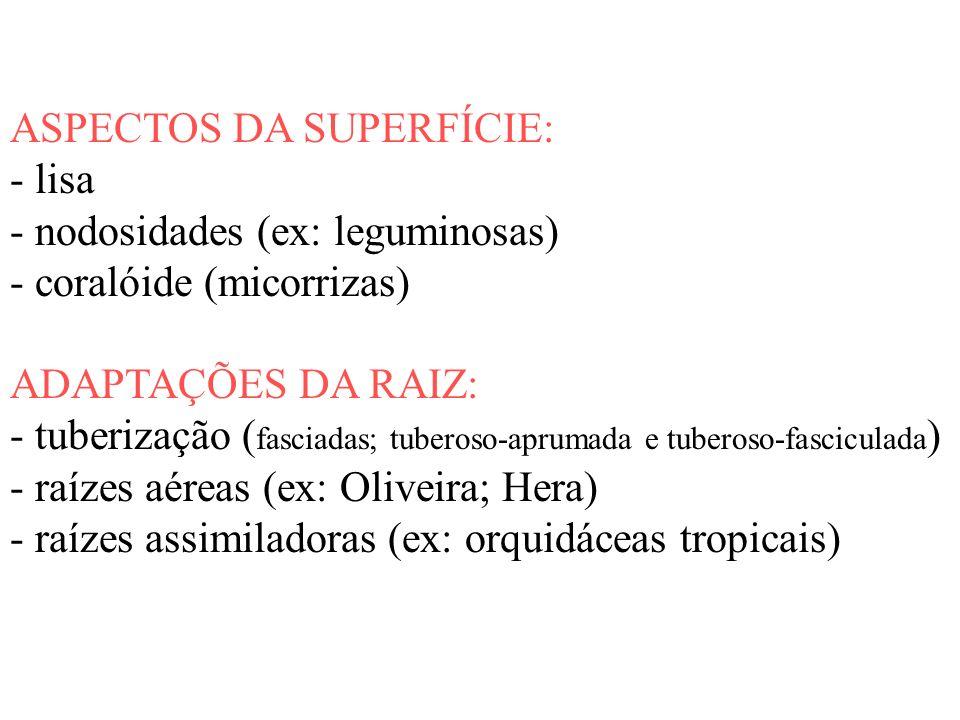 ASPECTOS DA SUPERFÍCIE: