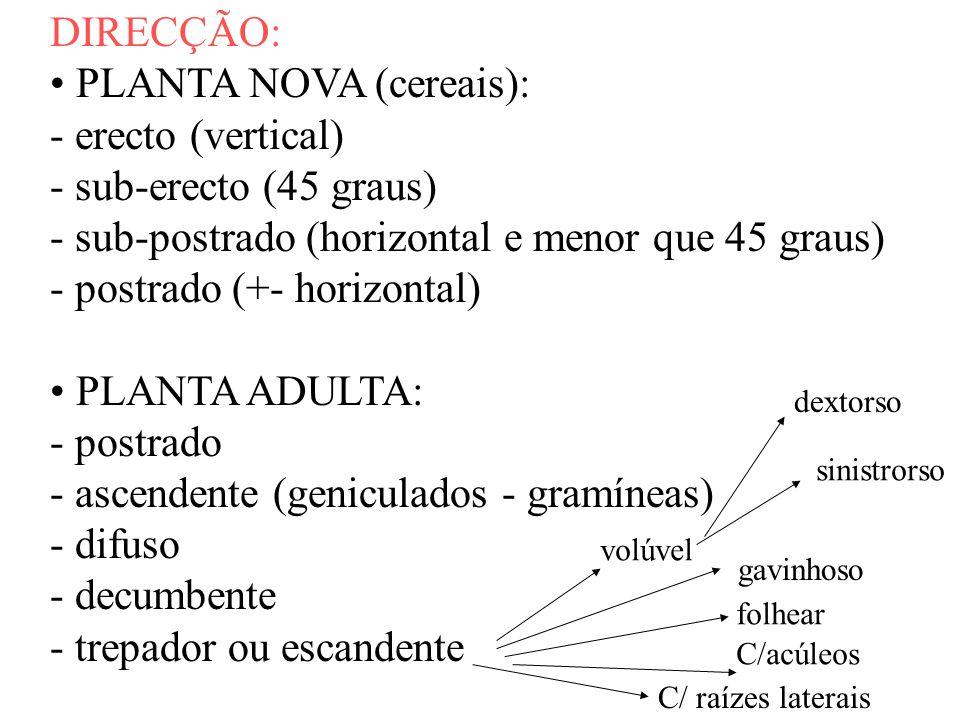 PLANTA NOVA (cereais): - erecto (vertical) - sub-erecto (45 graus)