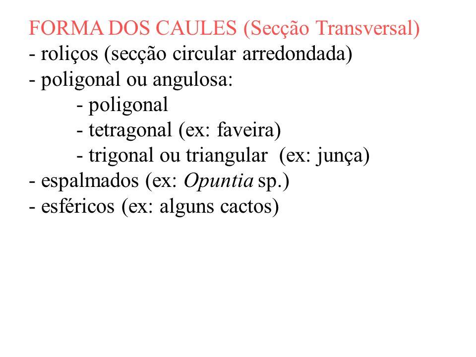 FORMA DOS CAULES (Secção Transversal)