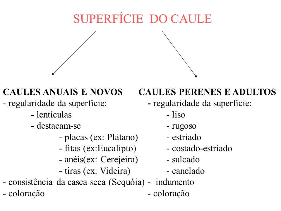 SUPERFÍCIE DO CAULE CAULES ANUAIS E NOVOS