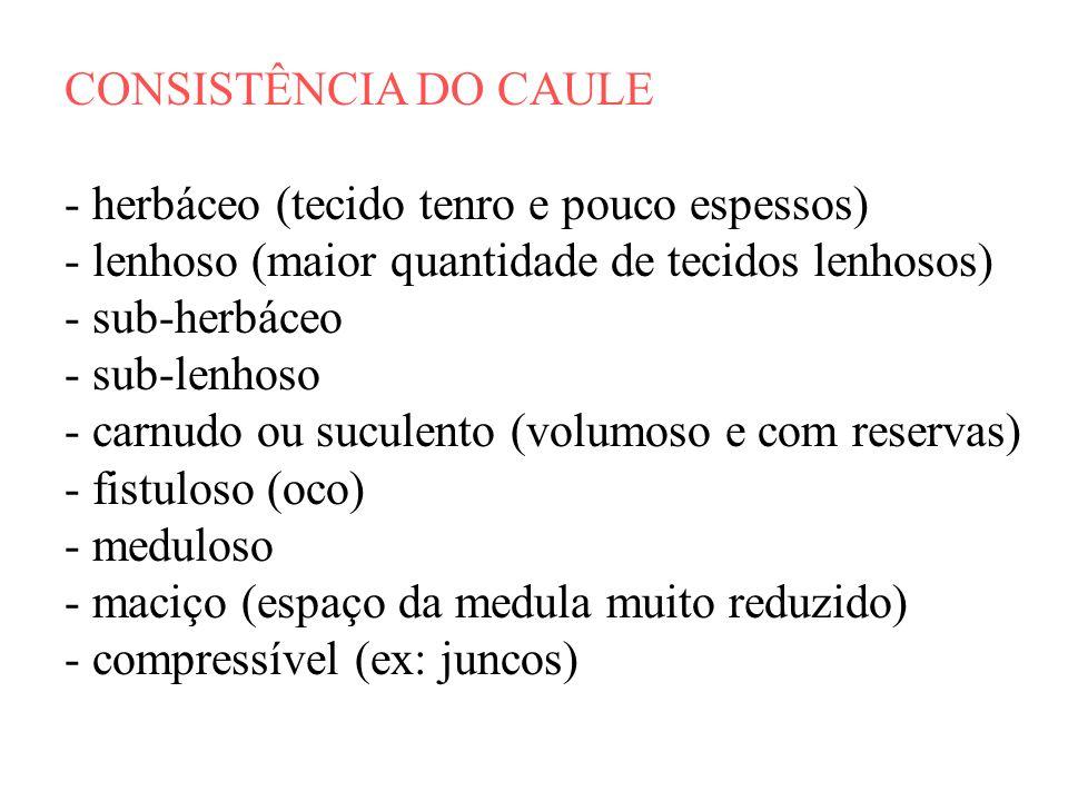 CONSISTÊNCIA DO CAULE - herbáceo (tecido tenro e pouco espessos) - lenhoso (maior quantidade de tecidos lenhosos)