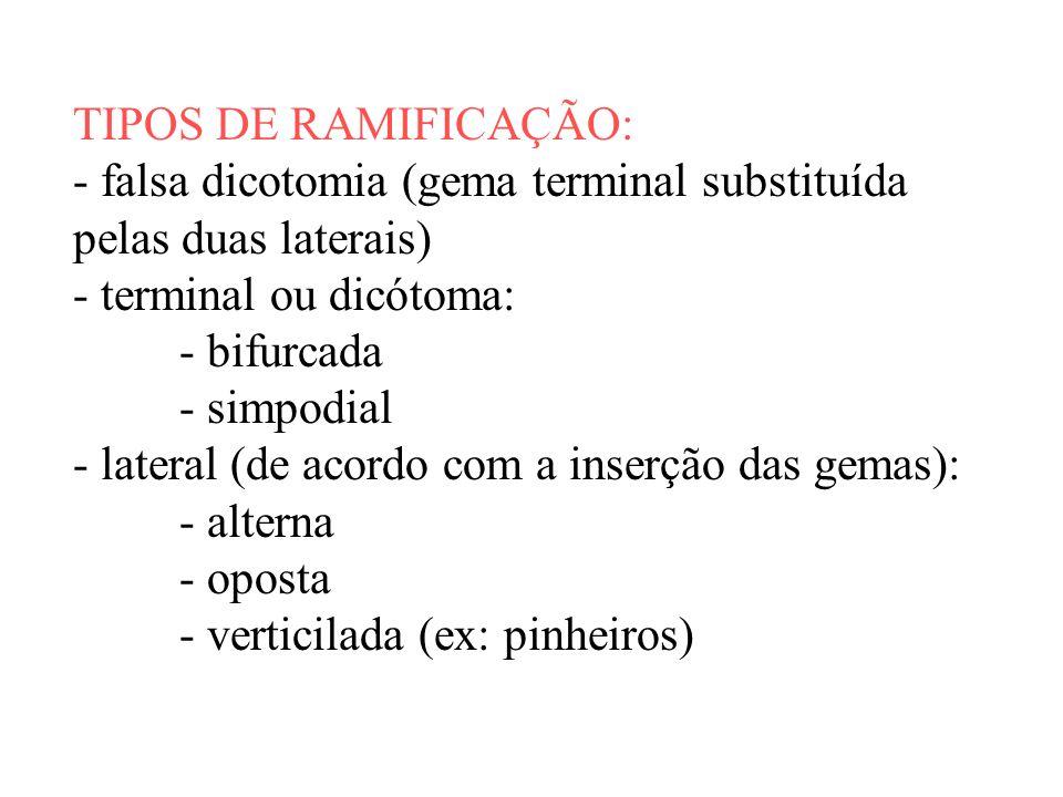 TIPOS DE RAMIFICAÇÃO: - falsa dicotomia (gema terminal substituída pelas duas laterais) - terminal ou dicótoma: