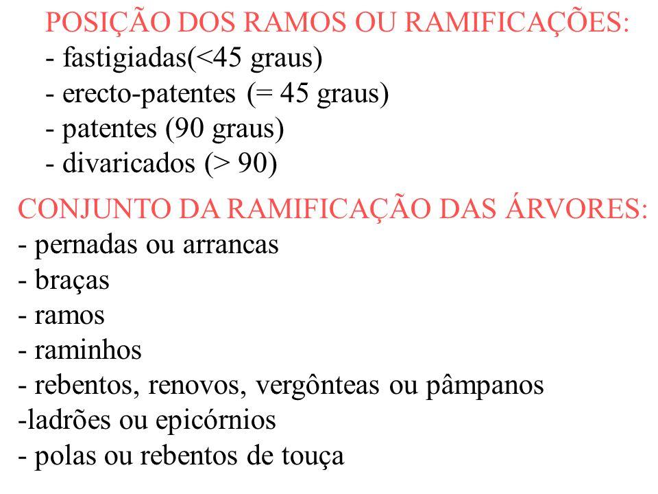 POSIÇÃO DOS RAMOS OU RAMIFICAÇÕES: