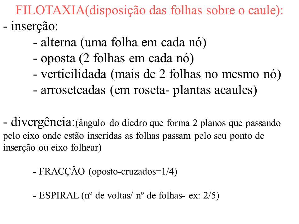 FILOTAXIA(disposição das folhas sobre o caule):