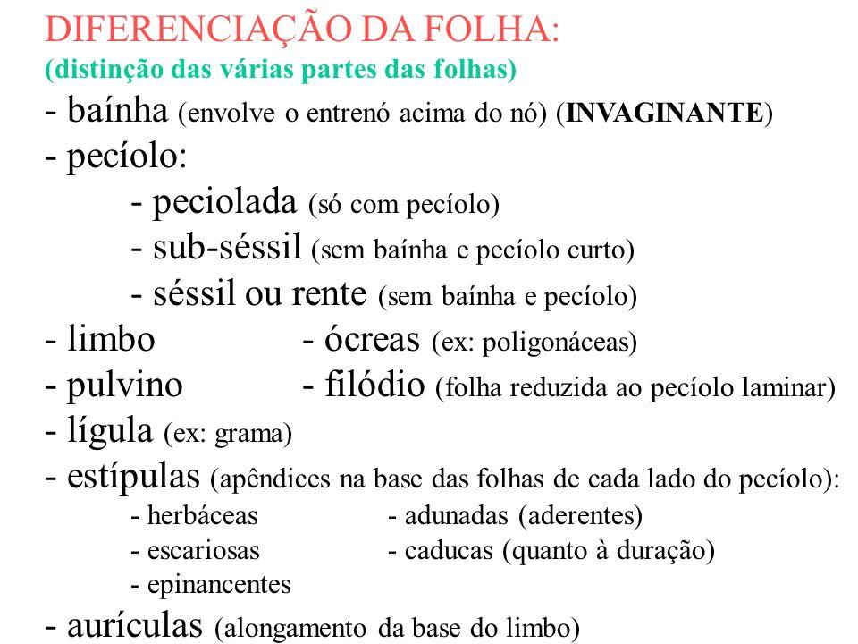 DIFERENCIAÇÃO DA FOLHA: