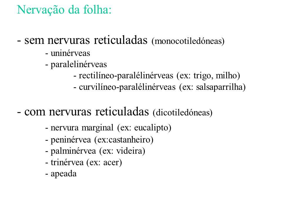 - sem nervuras reticuladas (monocotiledóneas)