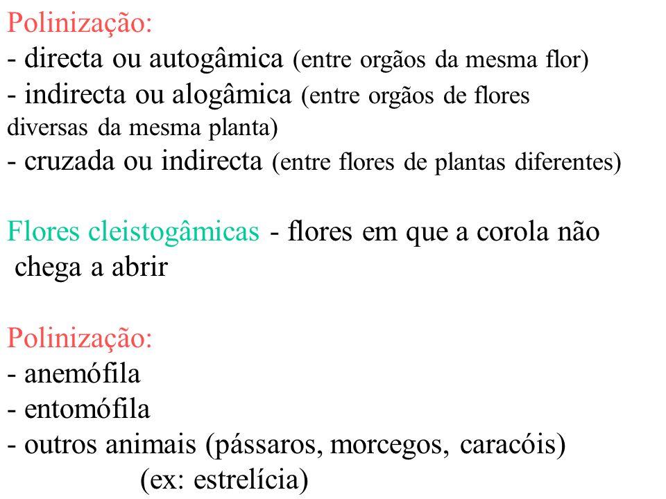 - directa ou autogâmica (entre orgãos da mesma flor)