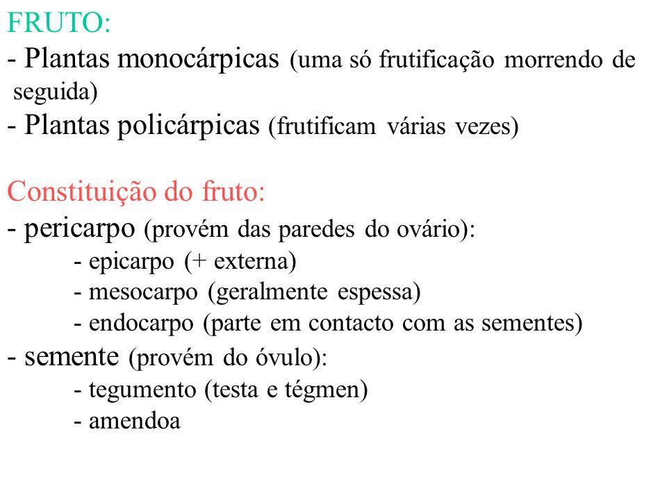 - Plantas monocárpicas (uma só frutificação morrendo de