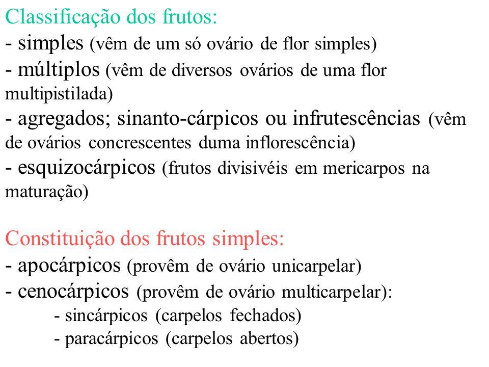 Classificação dos frutos: