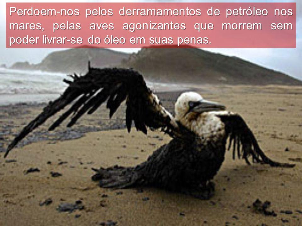 Perdoem-nos pelos derramamentos de petróleo nos mares, pelas aves agonizantes que morrem sem poder livrar-se do óleo em suas penas.