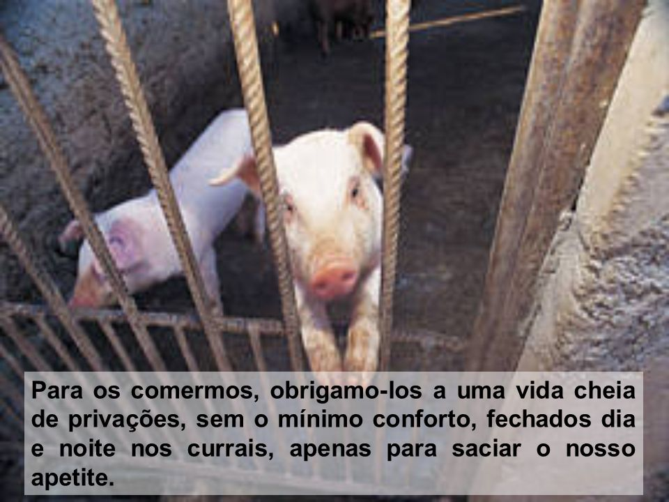 Para os comermos, obrigamo-los a uma vida cheia de privações, sem o mínimo conforto, fechados dia e noite nos currais, apenas para saciar o nosso apetite.