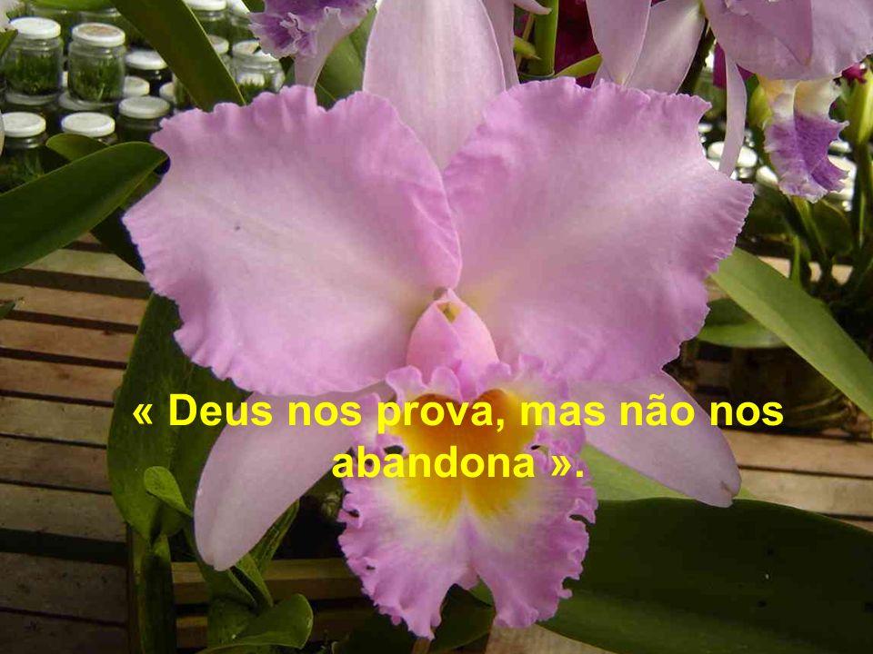 « Deus nos prova, mas não nos abandona ».