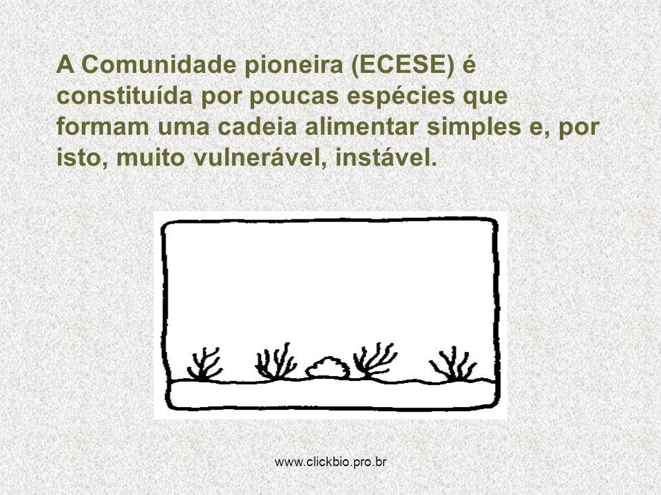 A Comunidade pioneira (ECESE) é constituída por poucas espécies que formam uma cadeia alimentar simples e, por isto, muito vulnerável, instável.