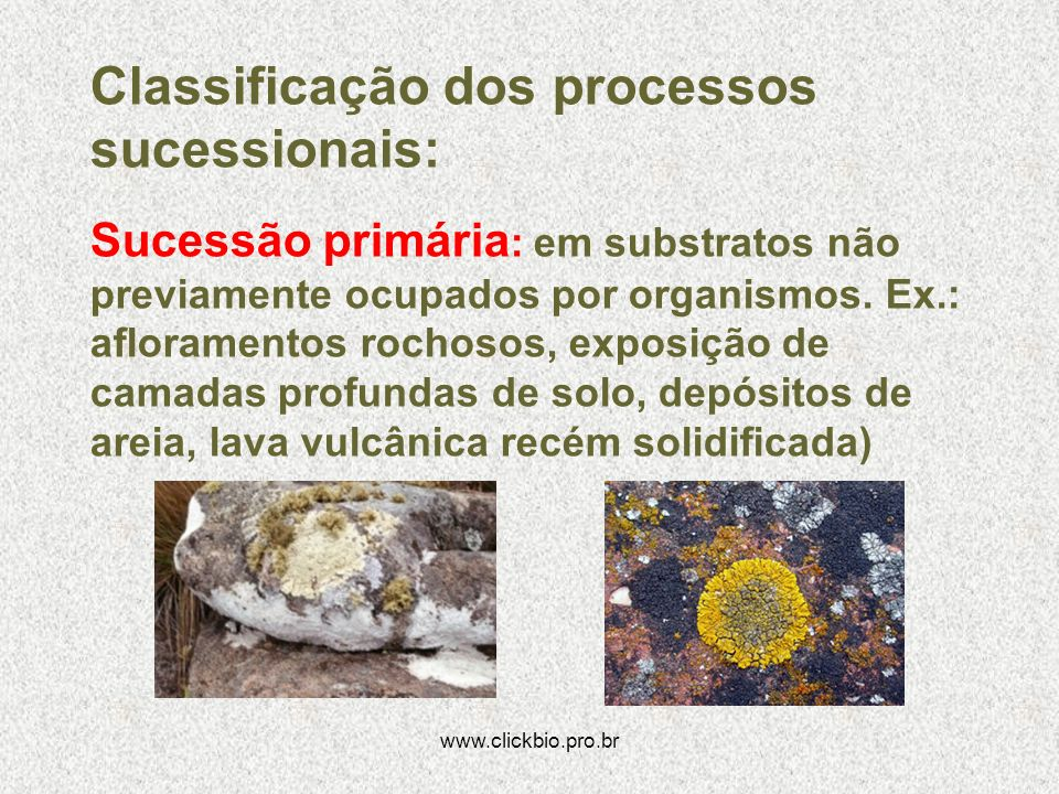 Classificação dos processos sucessionais: