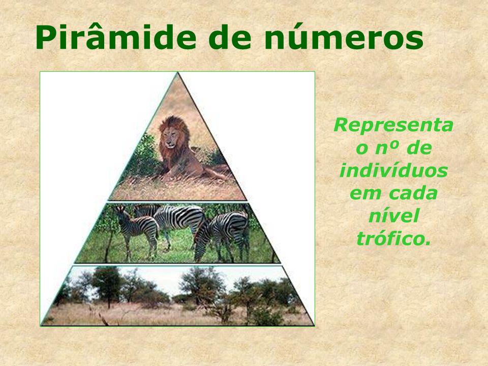 Representa o nº de indivíduos em cada nível trófico.