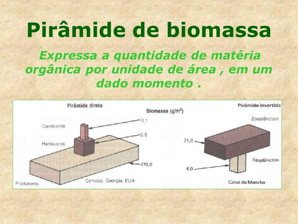 Pirâmide de biomassa Expressa a quantidade de matéria orgânica por unidade de área , em um dado momento .