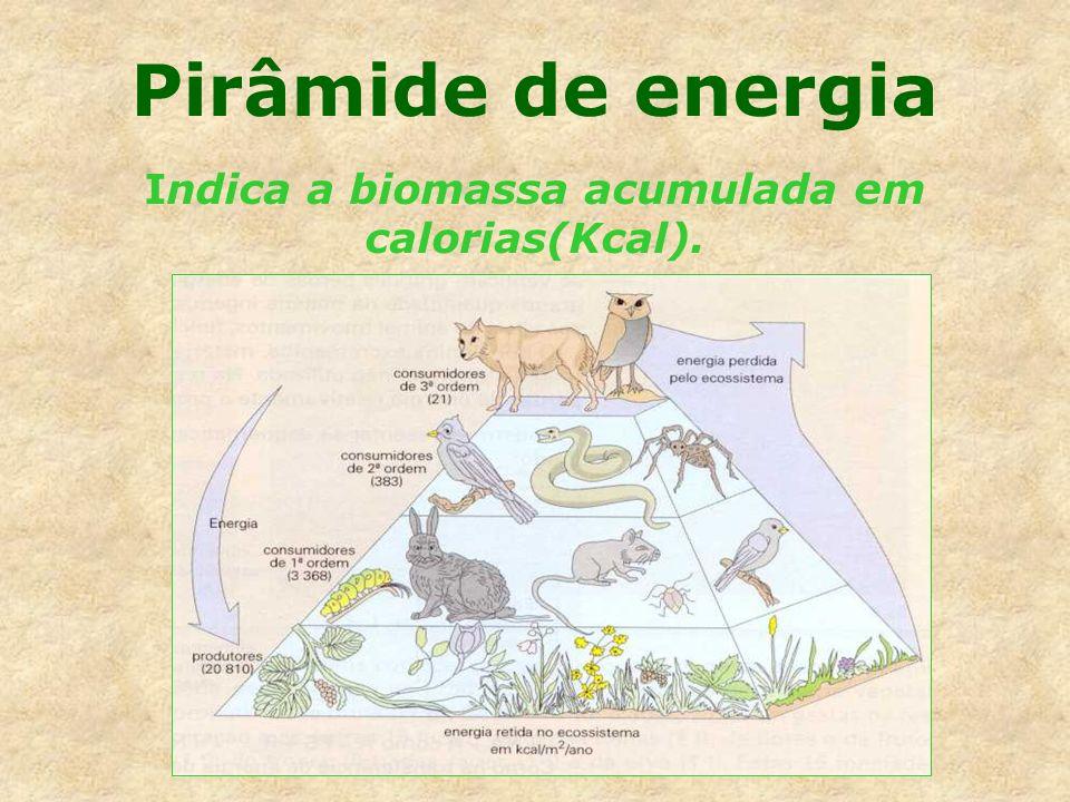 Indica a biomassa acumulada em calorias(Kcal).