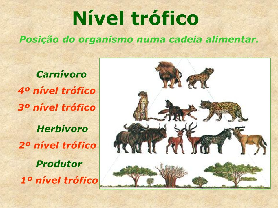 Nível trófico Posição do organismo numa cadeia alimentar. Carnívoro