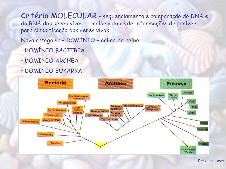 Critério MOLECULAR – sequenciamento e comparação do DNA e do RNA dos seres vivos  maior volume de informações disponíveis para classificação dos seres vivos.