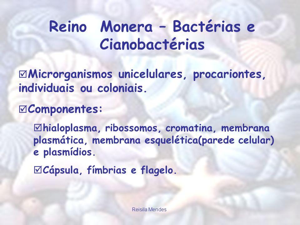 Reino Monera – Bactérias e Cianobactérias
