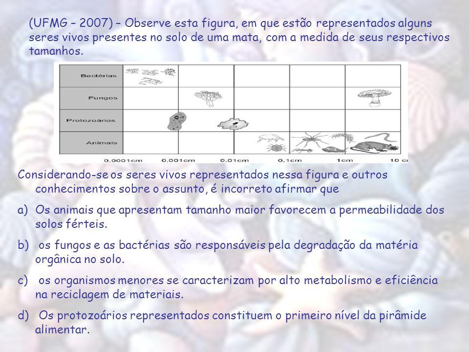 (UFMG – 2007) – Observe esta figura, em que estão representados alguns seres vivos presentes no solo de uma mata, com a medida de seus respectivos tamanhos.