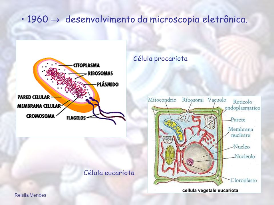 1960  desenvolvimento da microscopia eletrônica.