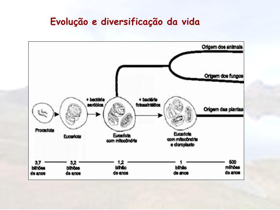 Evolução e diversificação da vida