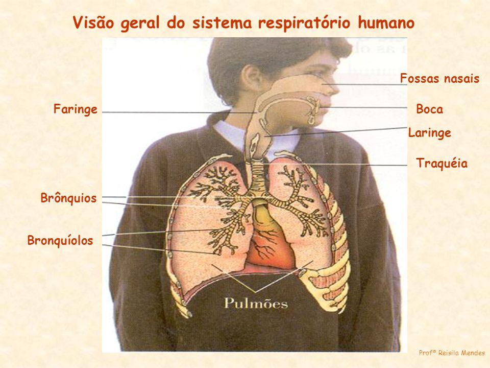Visão geral do sistema respiratório humano