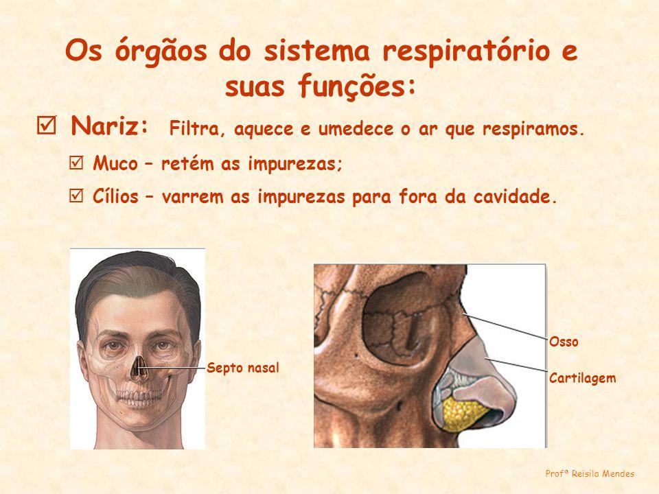 Os órgãos do sistema respiratório e suas funções: