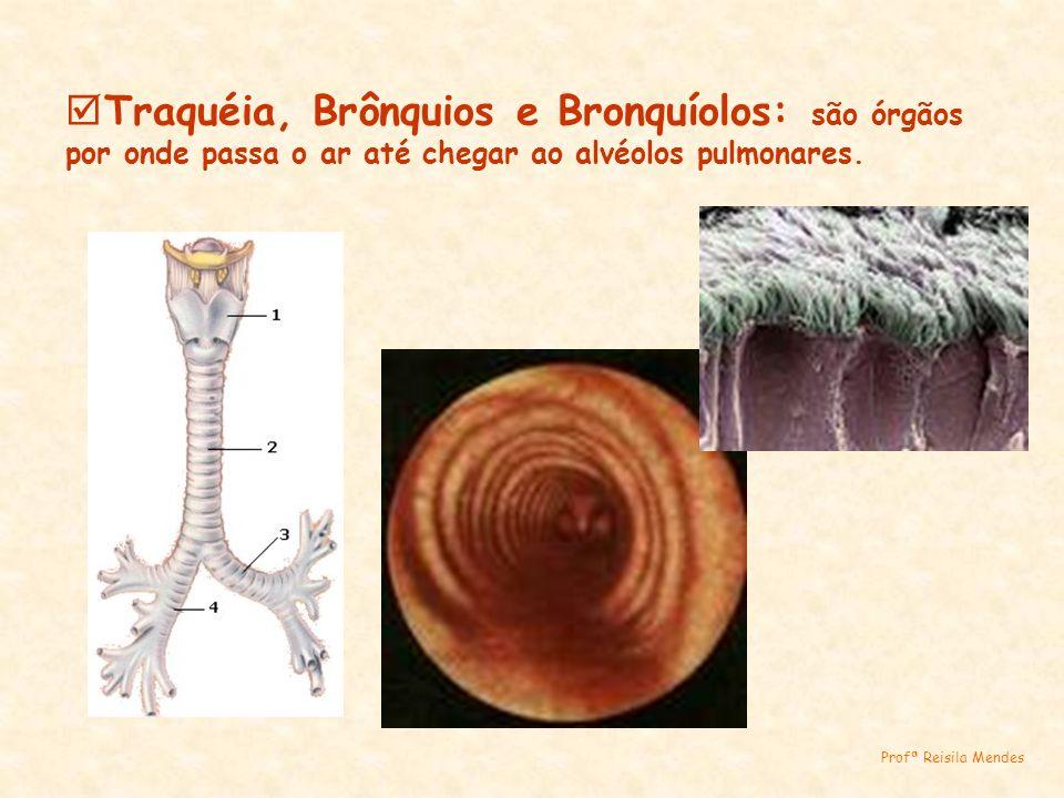 Traquéia, Brônquios e Bronquíolos: são órgãos por onde passa o ar até chegar ao alvéolos pulmonares.