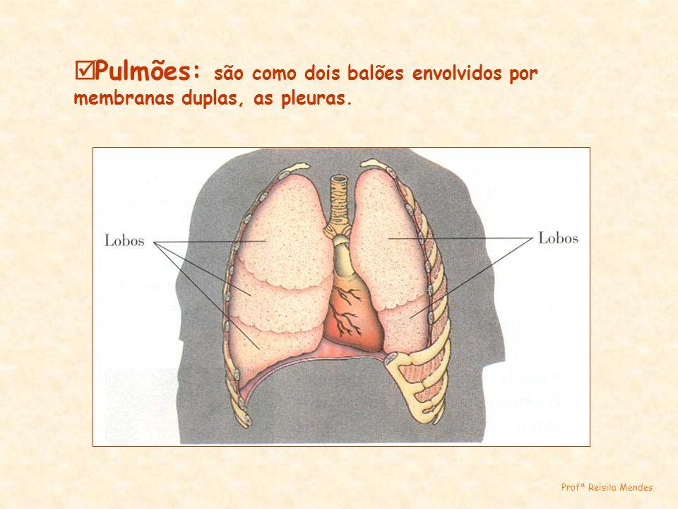 Pulmões: são como dois balões envolvidos por membranas duplas, as pleuras.