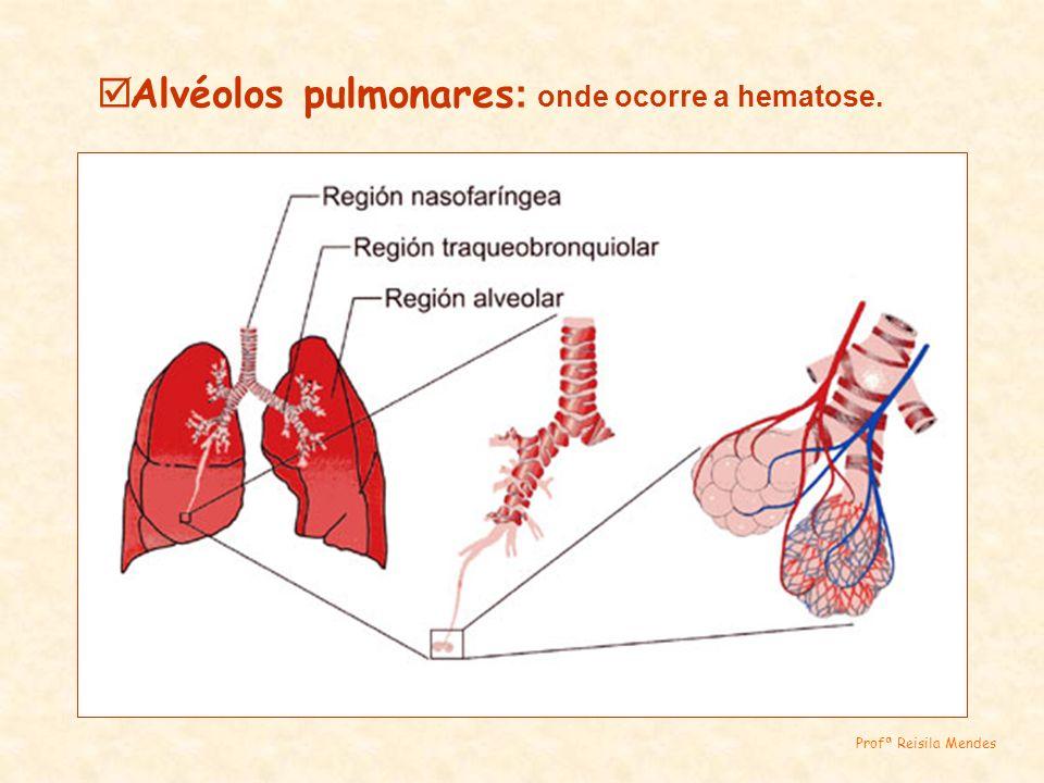 Alvéolos pulmonares: onde ocorre a hematose.