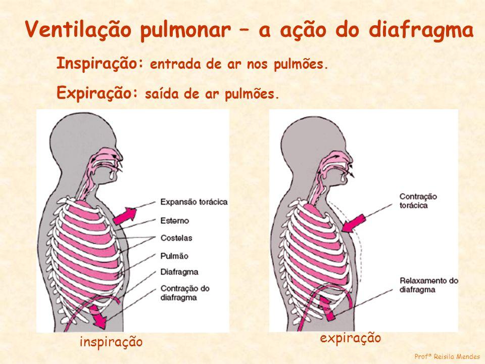 Ventilação pulmonar – a ação do diafragma