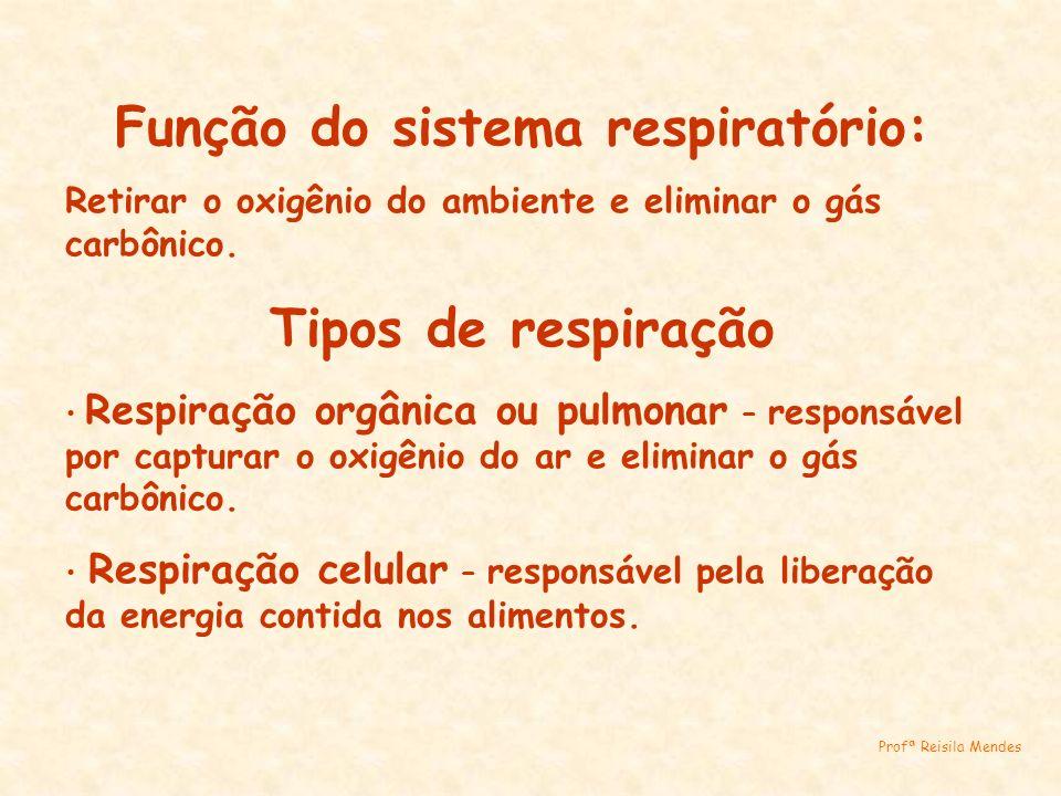 Função do sistema respiratório: