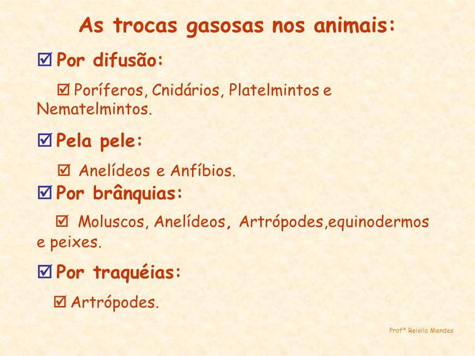 As trocas gasosas nos animais: