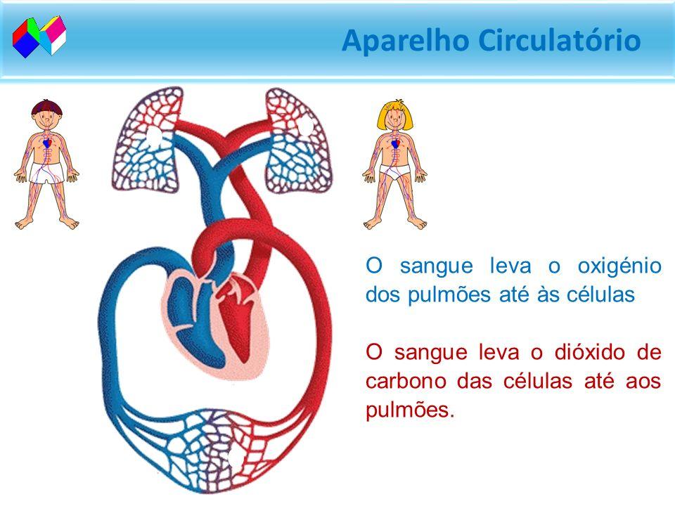 O sangue leva o oxigénio dos pulmões até às células