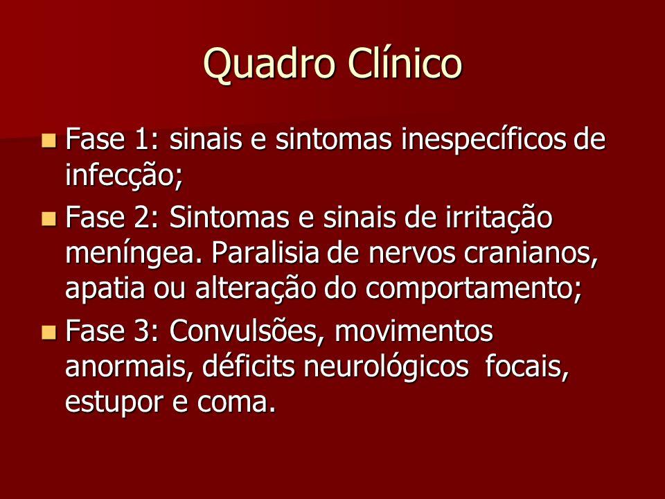 Quadro Clínico Fase 1: sinais e sintomas inespecíficos de infecção;