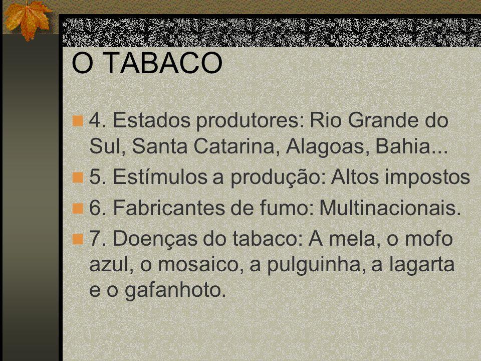 O TABACO4. Estados produtores: Rio Grande do Sul, Santa Catarina, Alagoas, Bahia... 5. Estímulos a produção: Altos impostos.