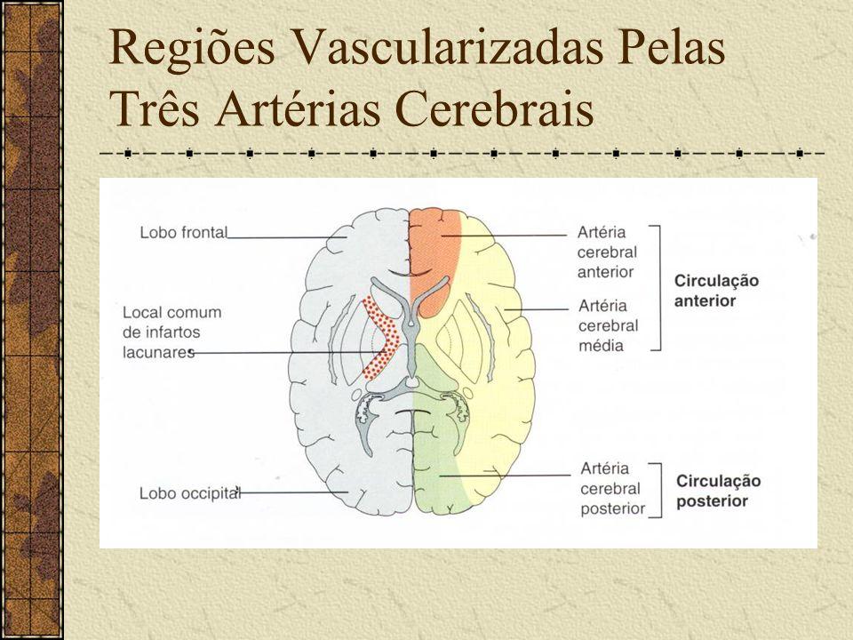 Regiões Vascularizadas Pelas Três Artérias Cerebrais