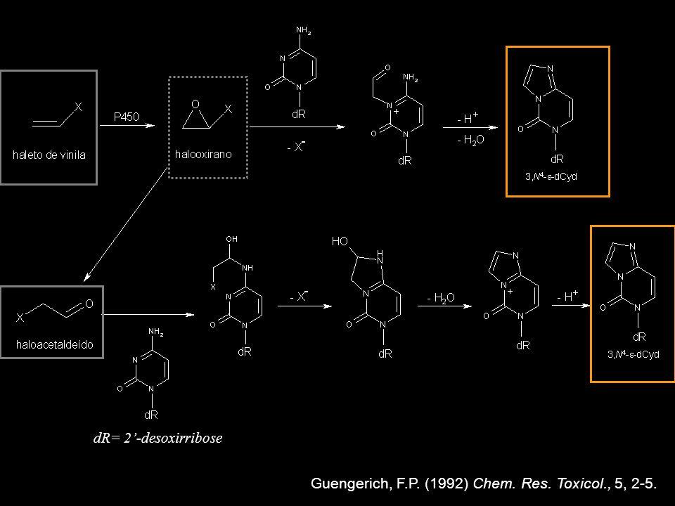 dR= 2'-desoxirribose Guengerich, F.P. (1992) Chem. Res. Toxicol., 5, 2-5.