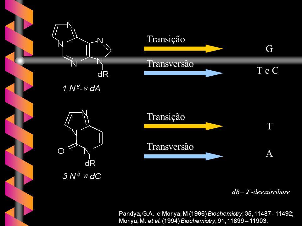 Transição G Transversão T e C T A dR= 2'-desoxirribose