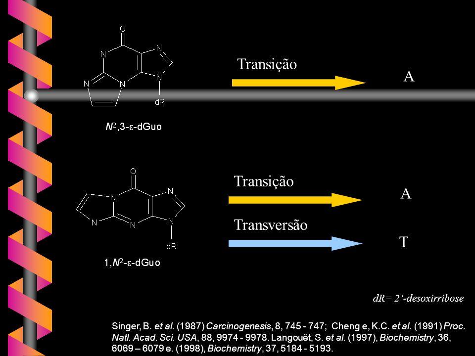 Transição A Transversão T dR= 2'-desoxirribose