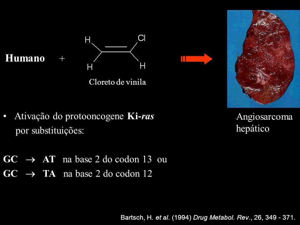 Humano + Ativação do protooncogene Ki-ras Angiosarcoma