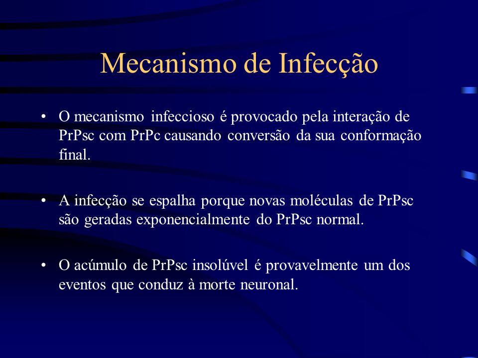 Mecanismo de Infecção O mecanismo infeccioso é provocado pela interação de PrPsc com PrPc causando conversão da sua conformação final.