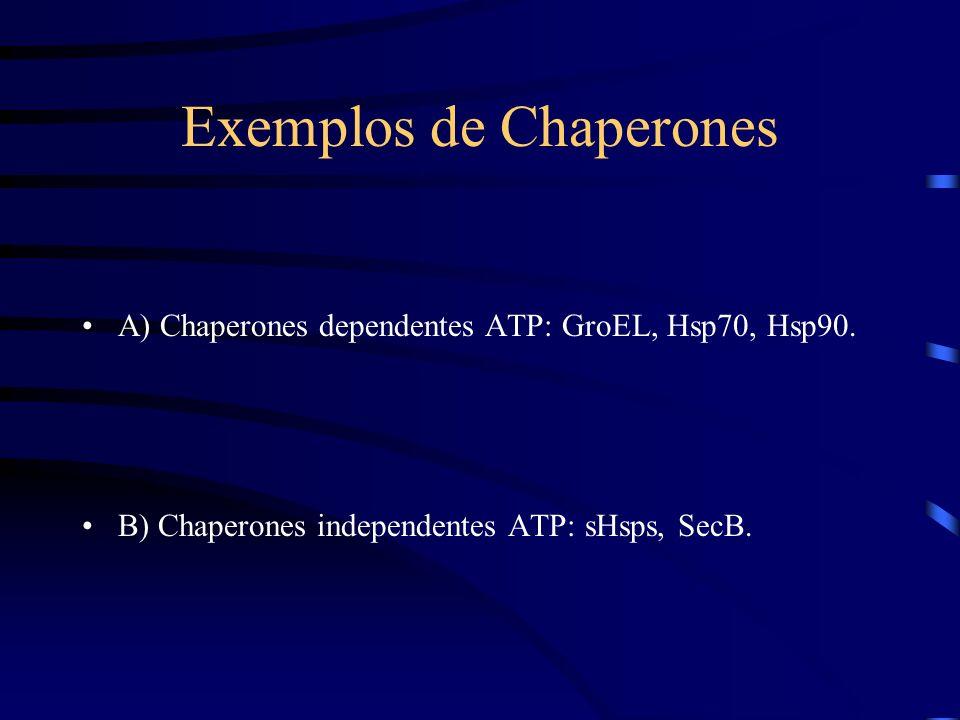 Exemplos de Chaperones