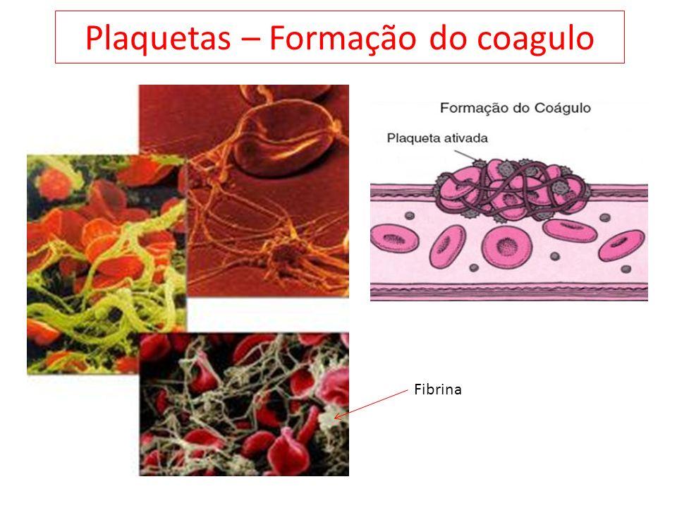 Plaquetas – Formação do coagulo