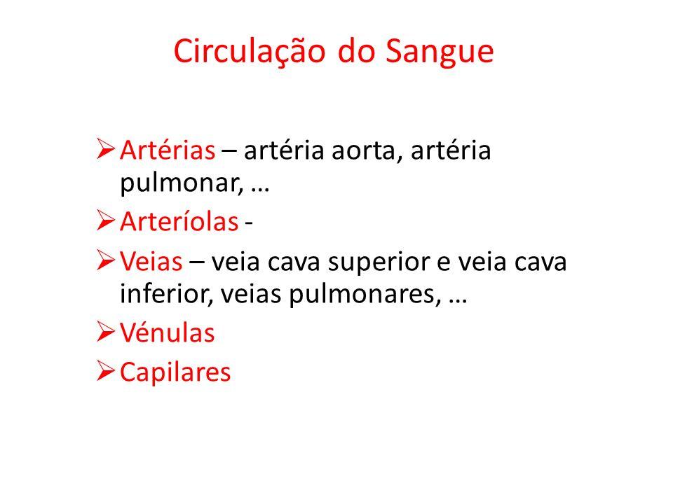 Circulação do Sangue Artérias – artéria aorta, artéria pulmonar, …