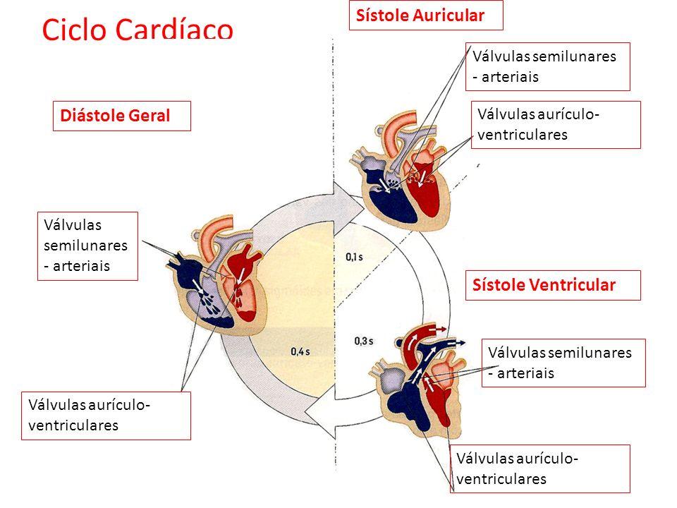 Ciclo Cardíaco Sístole Auricular Diástole Geral Sístole Ventricular